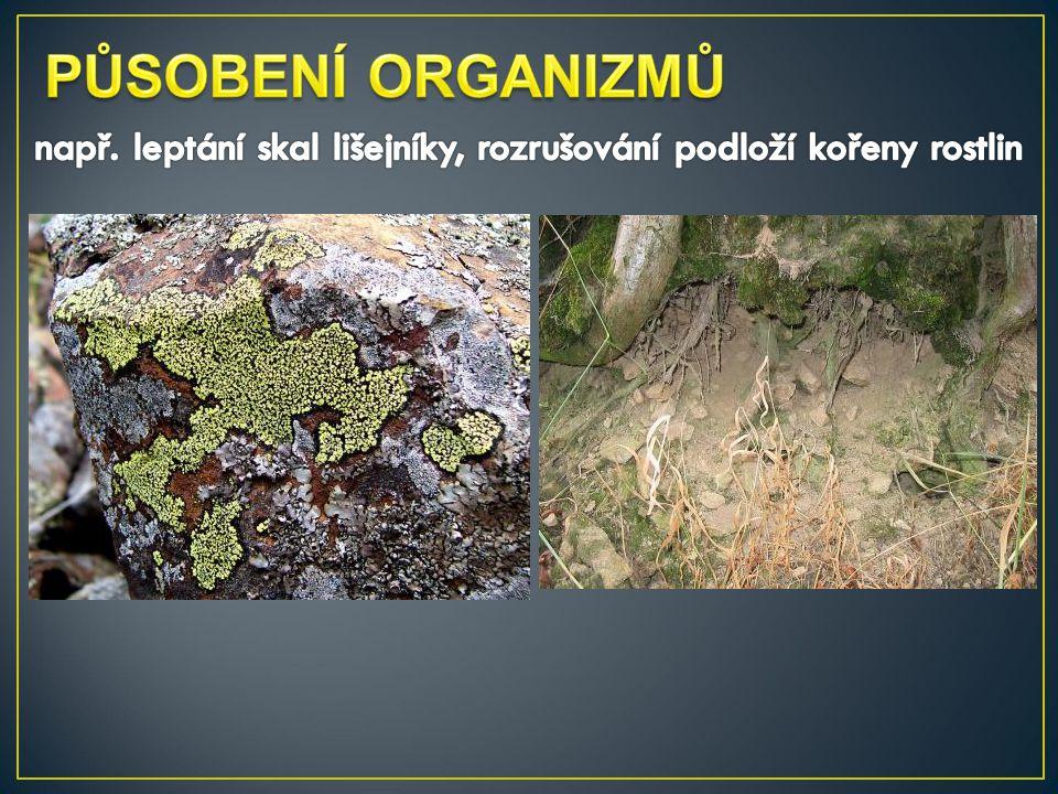 např. leptání skal lišejníky, rozrušování podloží kořeny rostlin