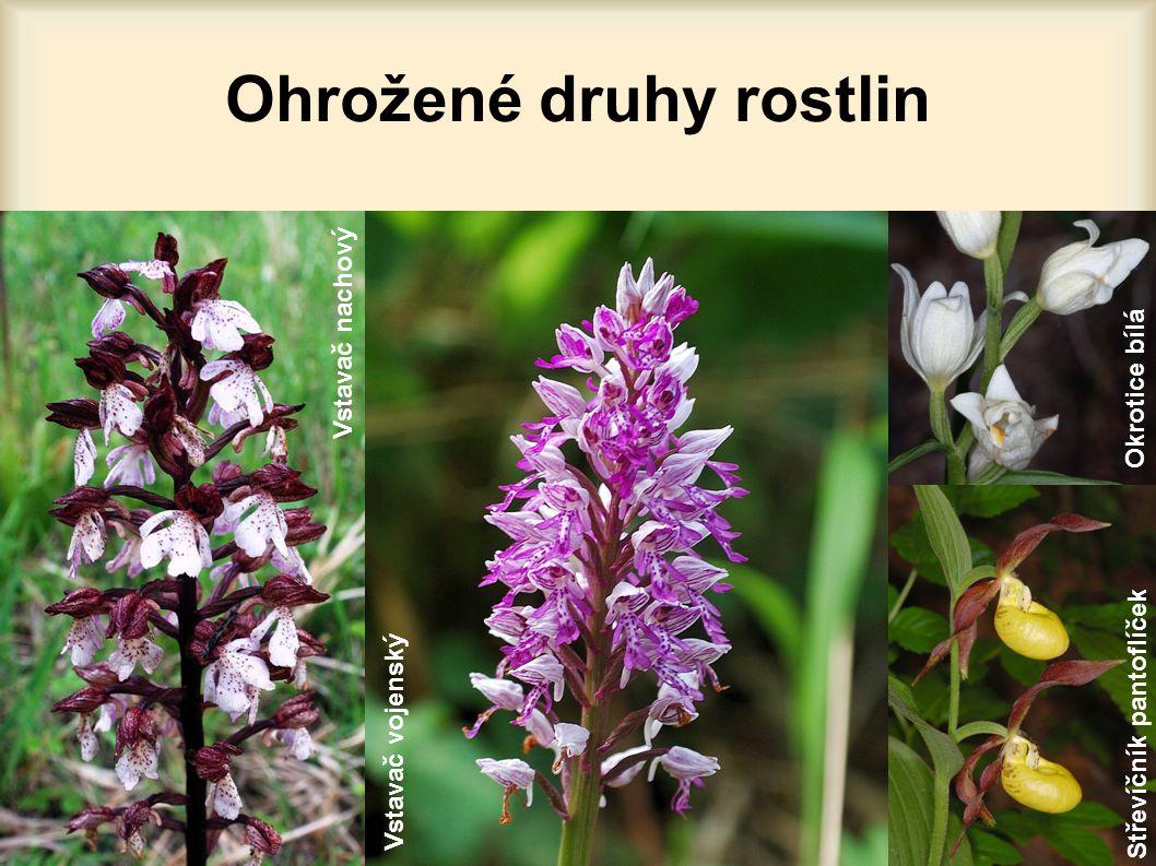 Ohrožené druhy rostlin