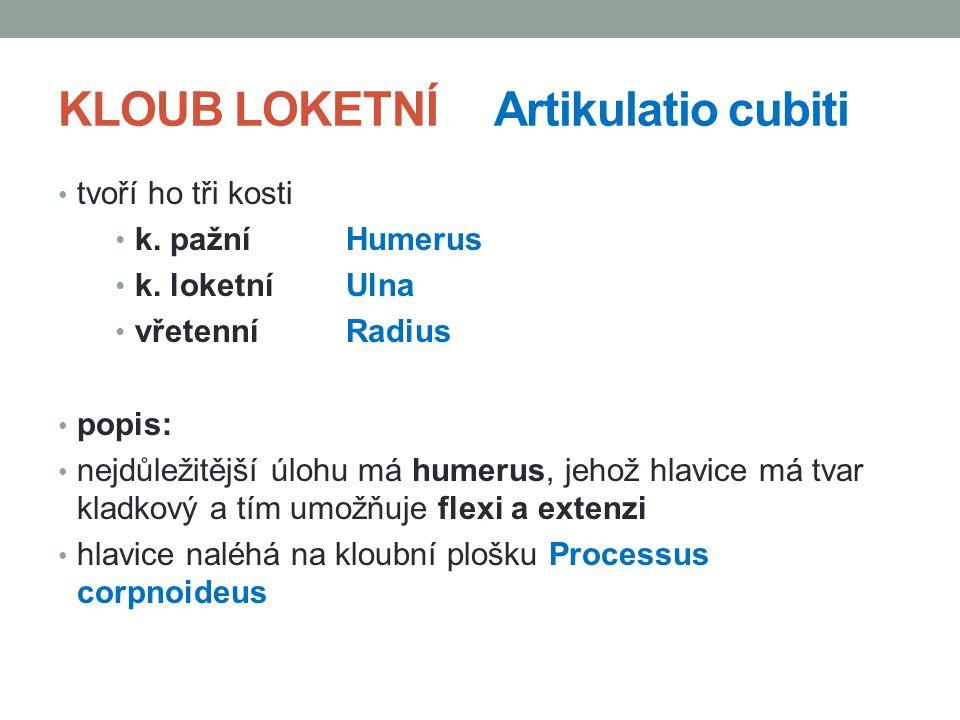 KLOUB LOKETNÍ Artikulatio cubiti