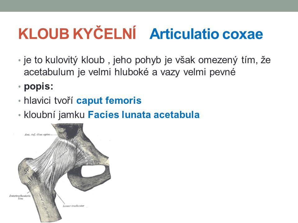KLOUB KYČELNÍ Articulatio coxae