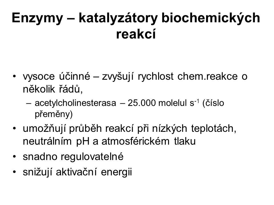 Enzymy – katalyzátory biochemických reakcí
