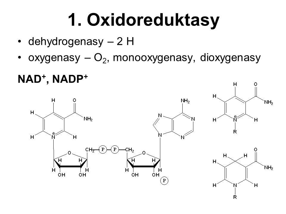 1. Oxidoreduktasy dehydrogenasy – 2 H