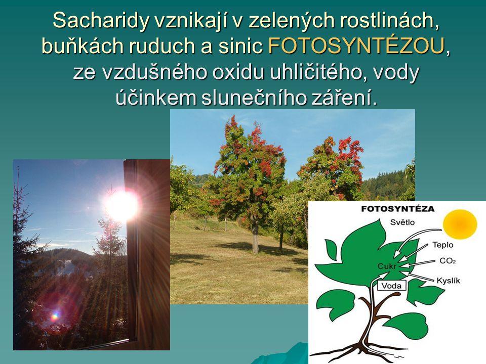 Sacharidy vznikají v zelených rostlinách, buňkách ruduch a sinic FOTOSYNTÉZOU, ze vzdušného oxidu uhličitého, vody účinkem slunečního záření.