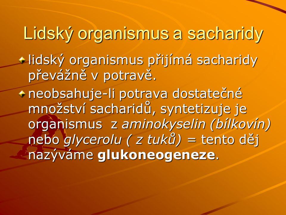 Lidský organismus a sacharidy