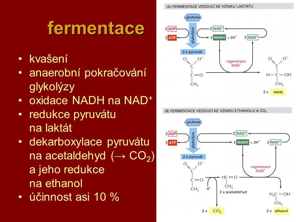 fermentace kvašení anaerobní pokračování glykolýzy