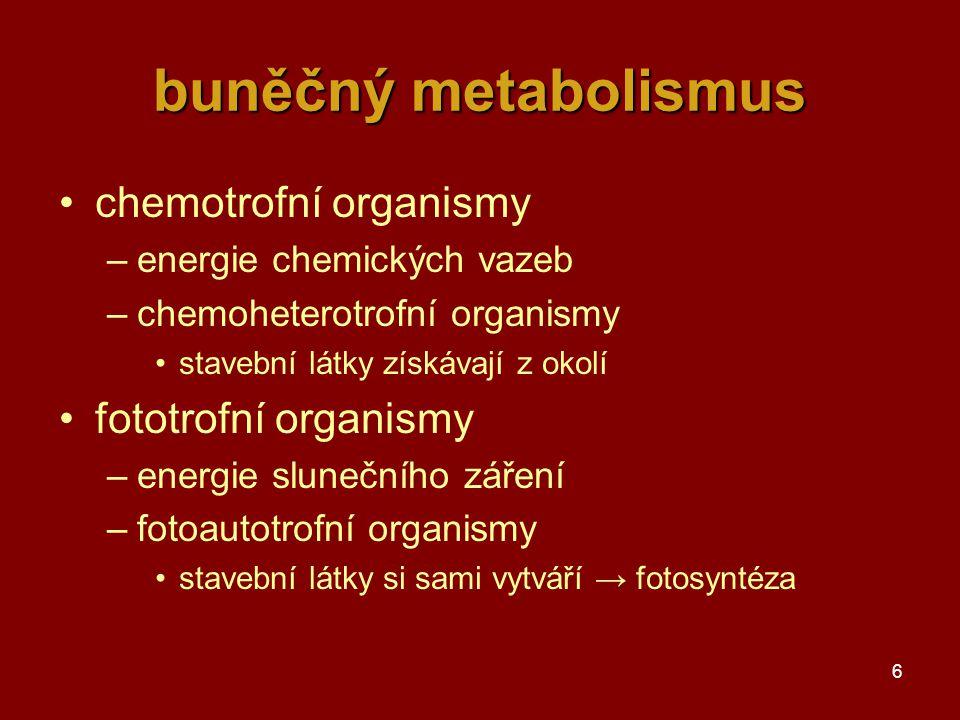 buněčný metabolismus chemotrofní organismy fototrofní organismy