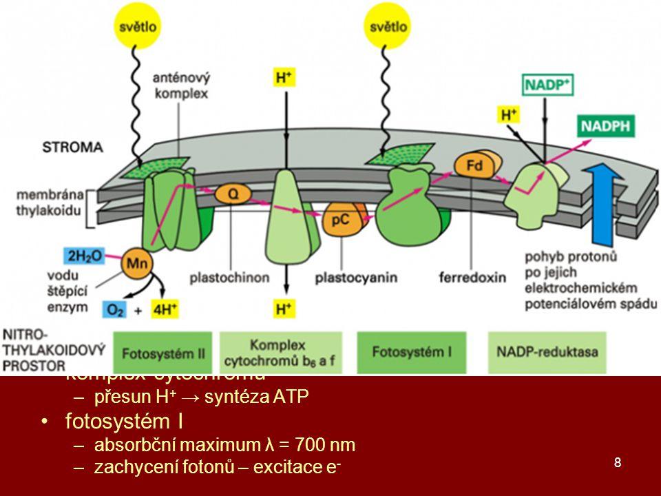 primární fáze fotosyntézy