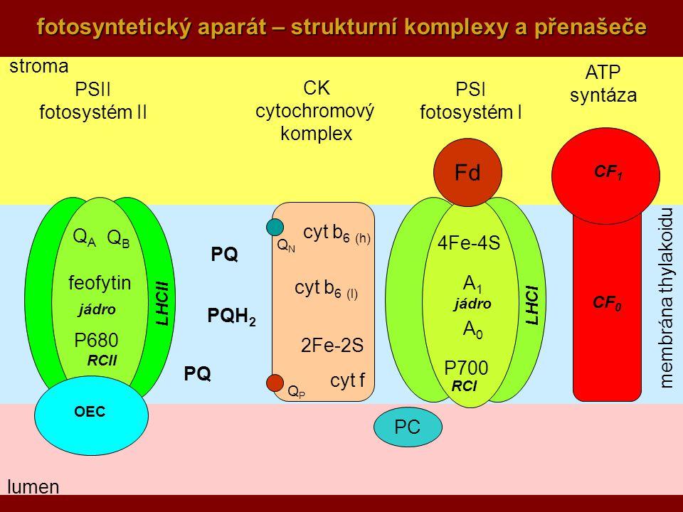 fotosyntetický aparát – strukturní komplexy a přenašeče