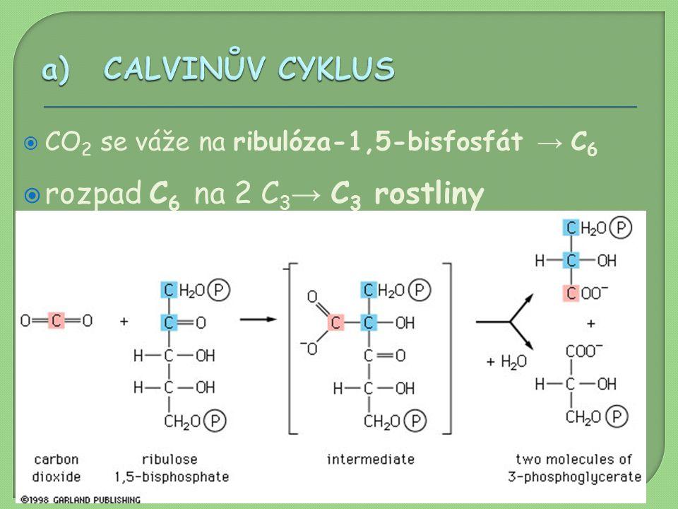 rozpad C6 na 2 C3→ C3 rostliny dalšími reakcemi vzniká C6 cukr