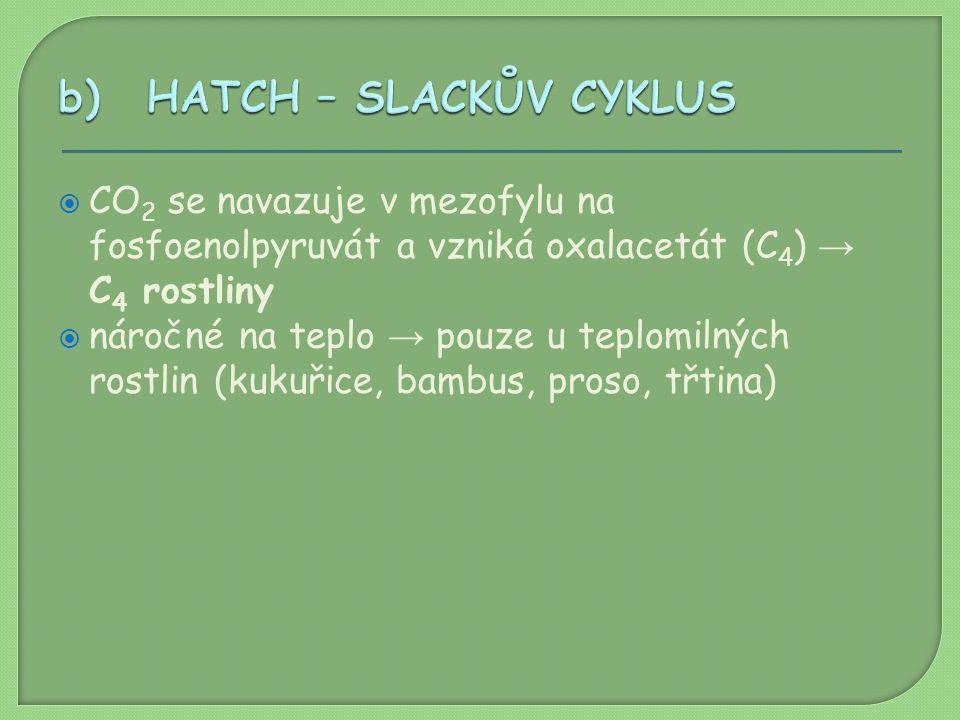 HATCH – SLACKŮV CYKLUS CO2 se navazuje v mezofylu na fosfoenolpyruvát a vzniká oxalacetát (C4) → C4 rostliny.