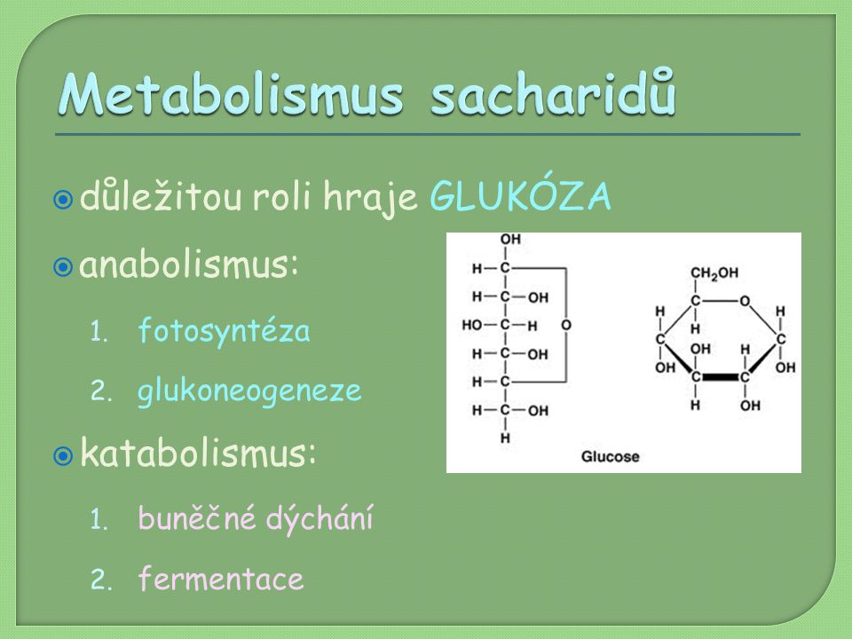 Metabolismus sacharidů