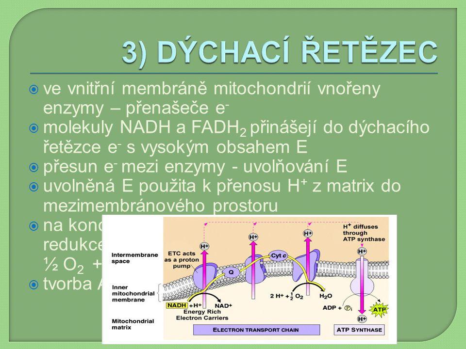 3) DÝCHACÍ ŘETĚZEC ve vnitřní membráně mitochondrií vnořeny enzymy – přenašeče e-