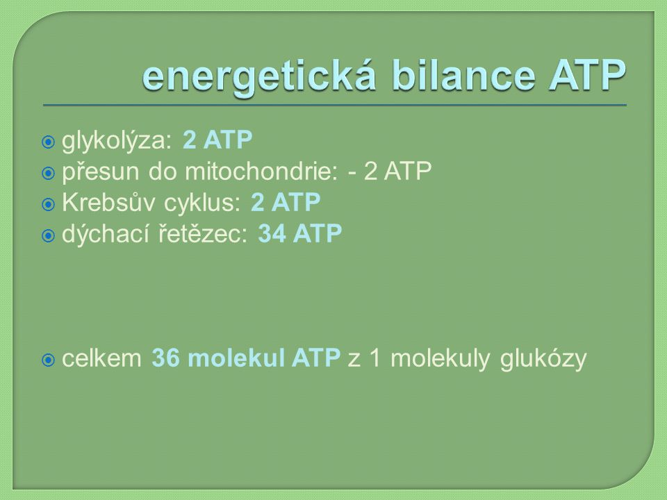 energetická bilance ATP