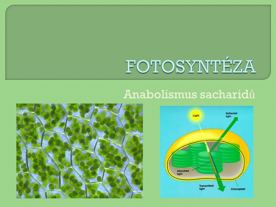 Anabolismus sacharidů
