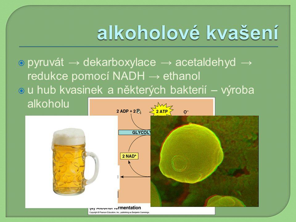 alkoholové kvašení pyruvát → dekarboxylace → acetaldehyd → redukce pomocí NADH → ethanol.