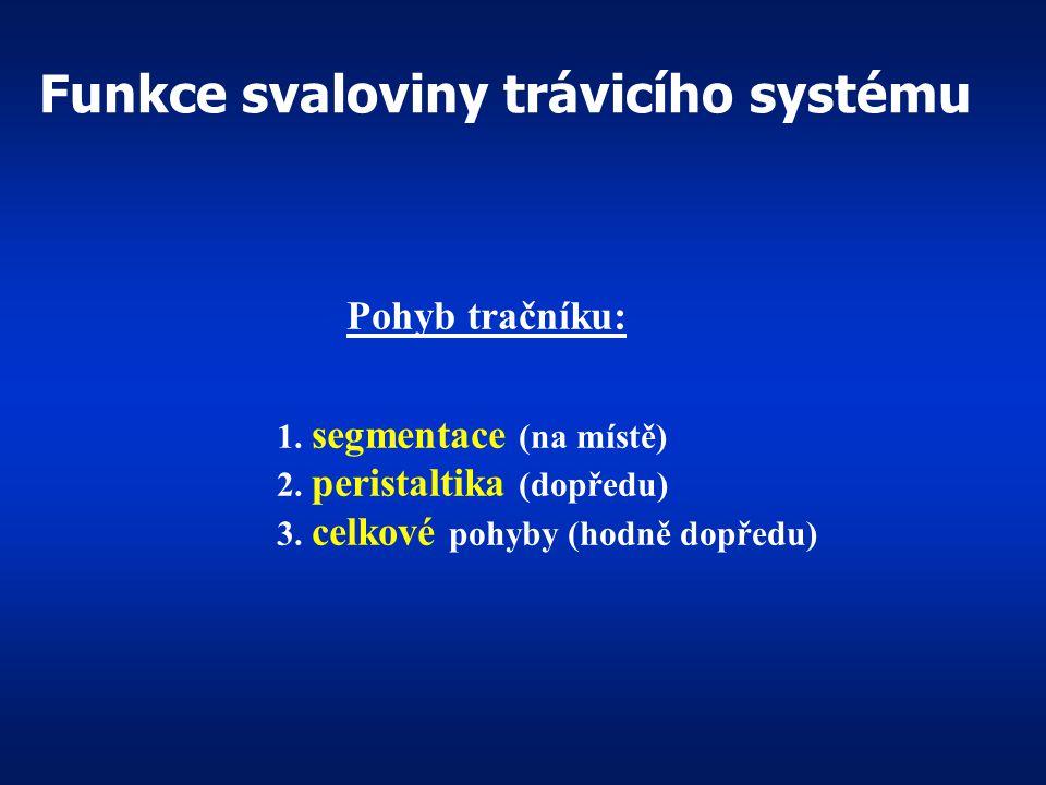 Funkce svaloviny trávicího systému