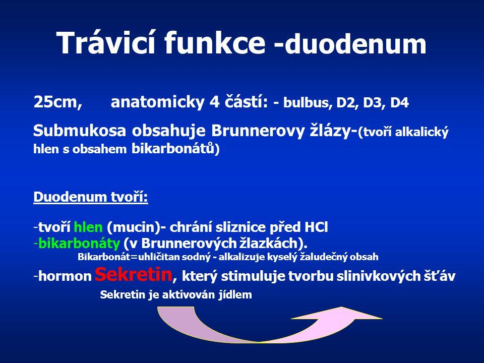 Trávicí funkce -duodenum