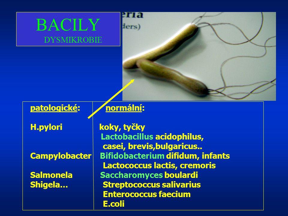 BACILY DYSMIKROBIE patologické: normální: H.pylori koky, tyčky