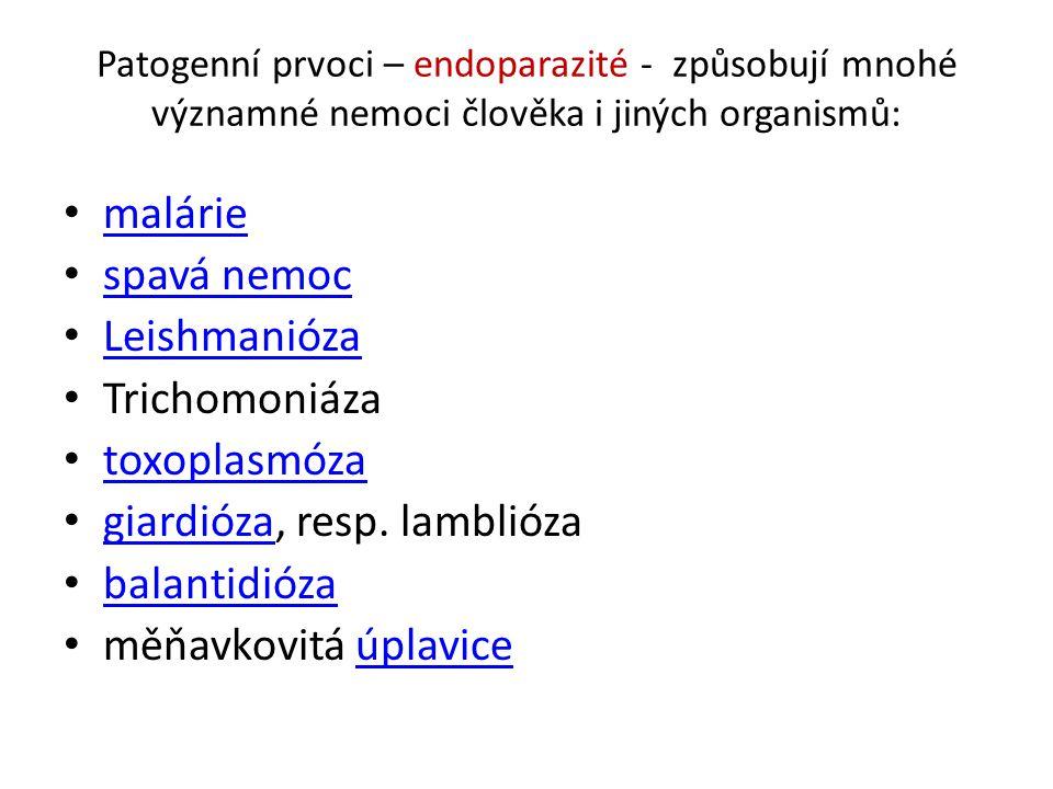 giardióza, resp. lamblióza balantidióza měňavkovitá úplavice