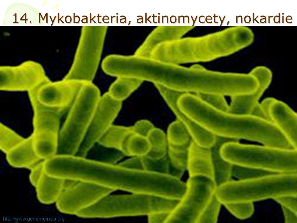 14. Mykobakteria, aktinomycety, nokardie