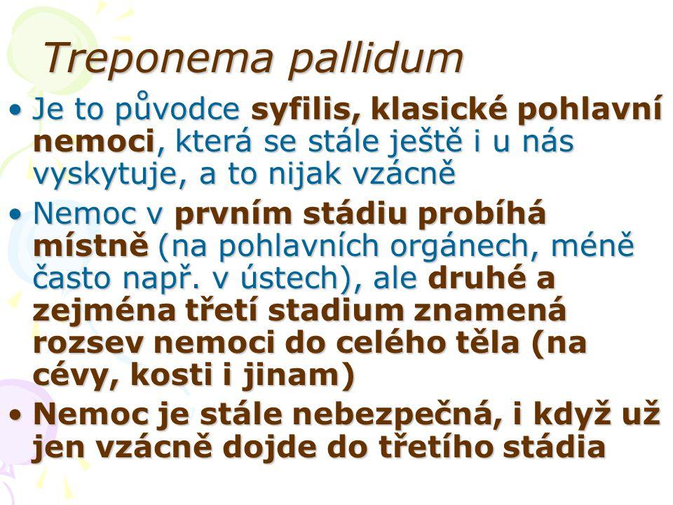 Treponema pallidum Je to původce syfilis, klasické pohlavní nemoci, která se stále ještě i u nás vyskytuje, a to nijak vzácně.