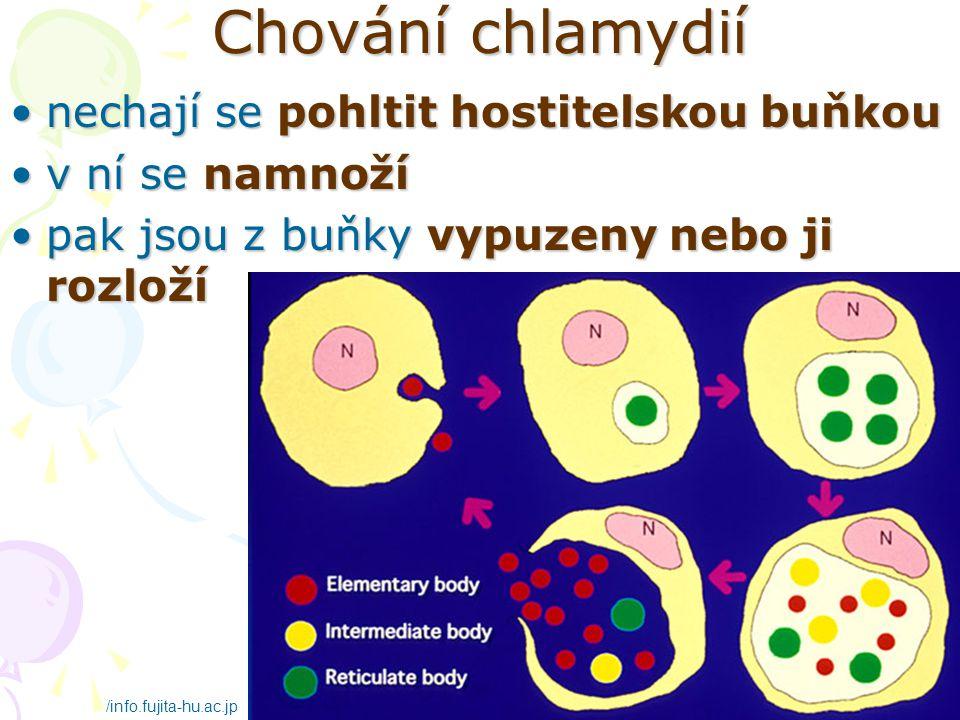 Chování chlamydií nechají se pohltit hostitelskou buňkou
