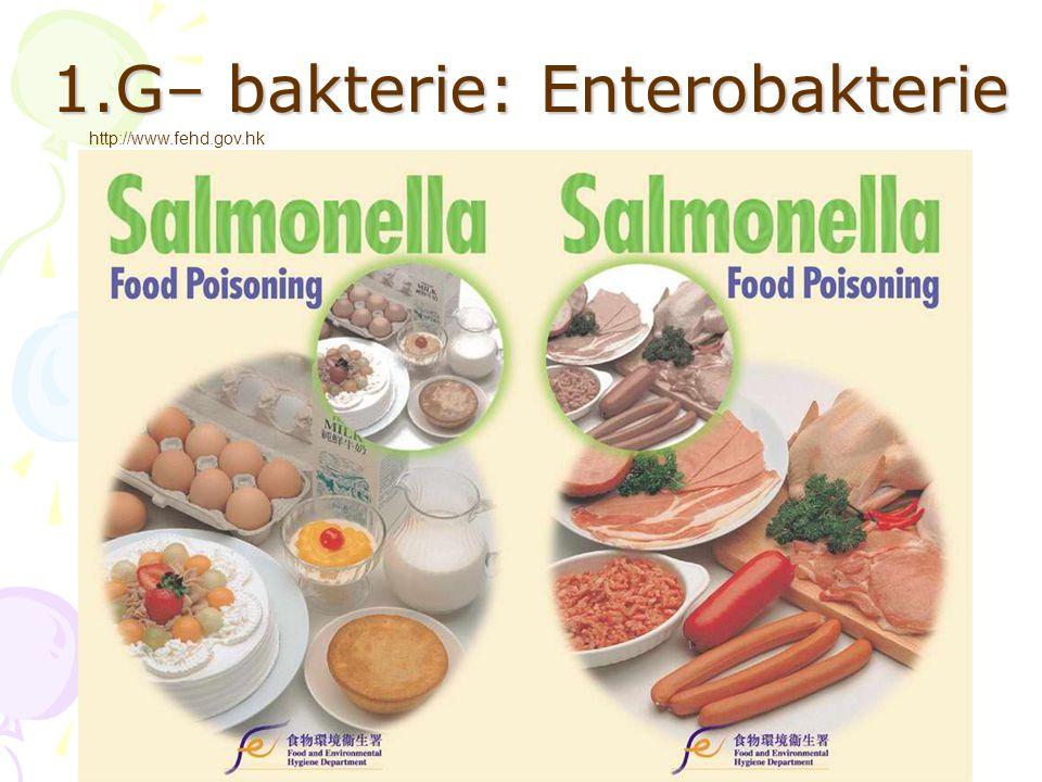 1.G– bakterie: Enterobakterie