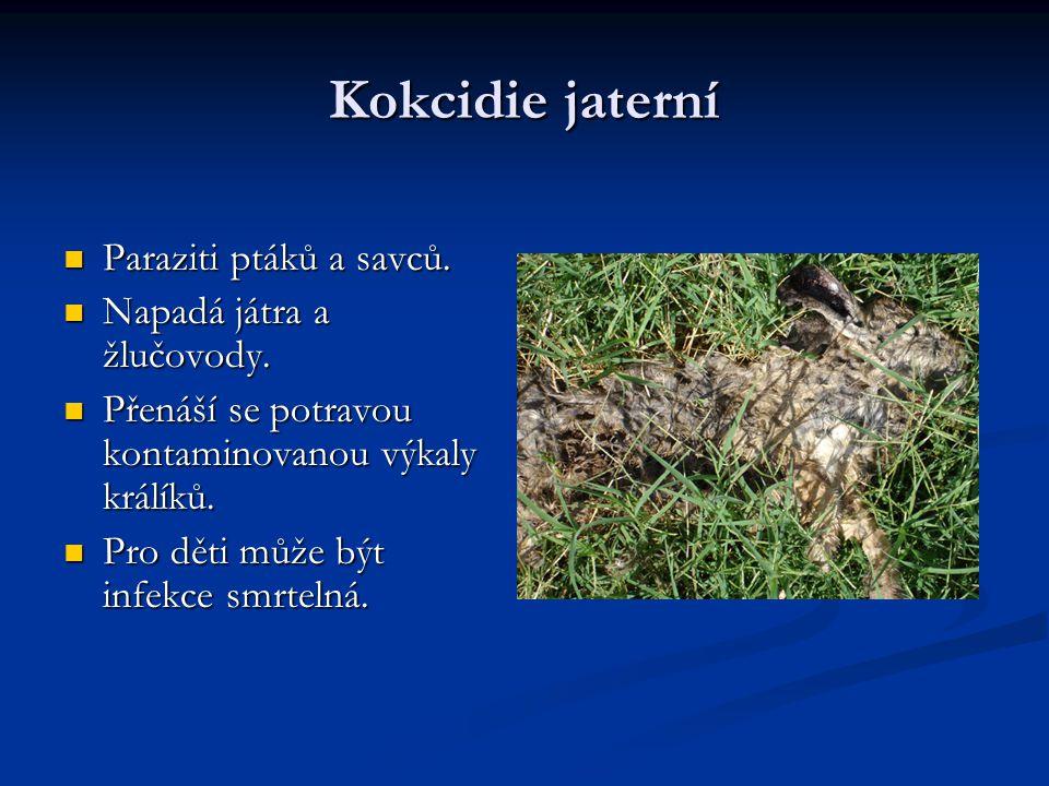 Kokcidie jaterní Paraziti ptáků a savců. Napadá játra a žlučovody.