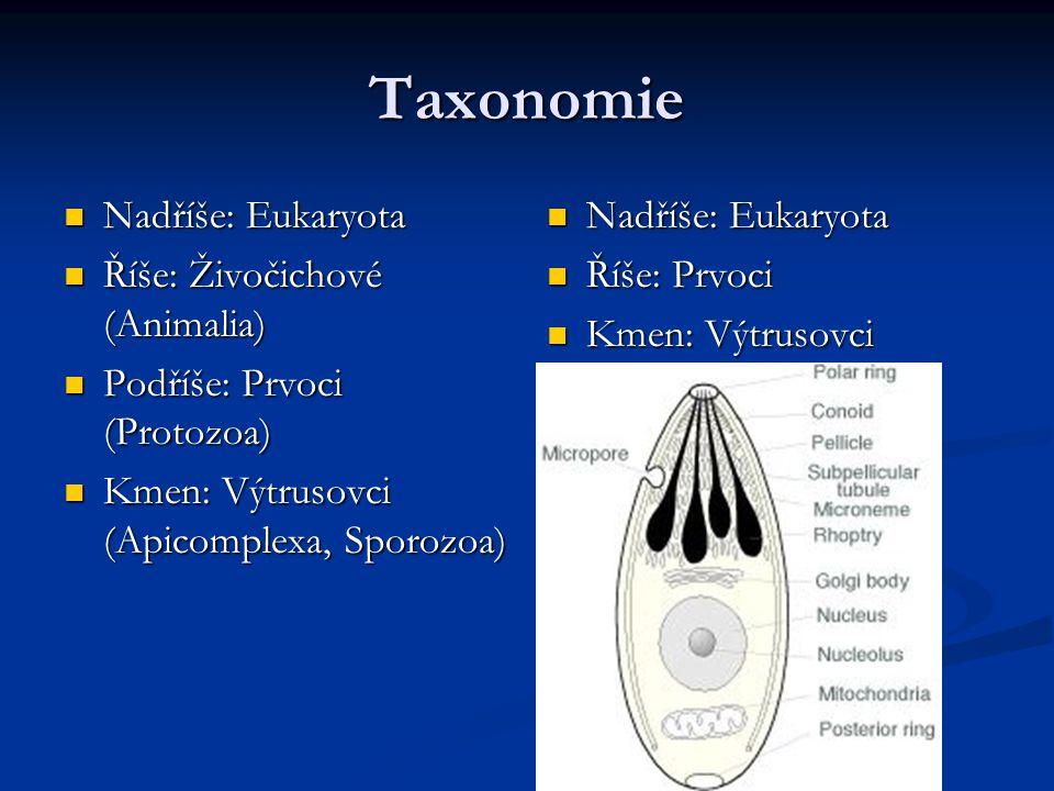 Taxonomie Nadříše: Eukaryota Říše: Živočichové (Animalia)