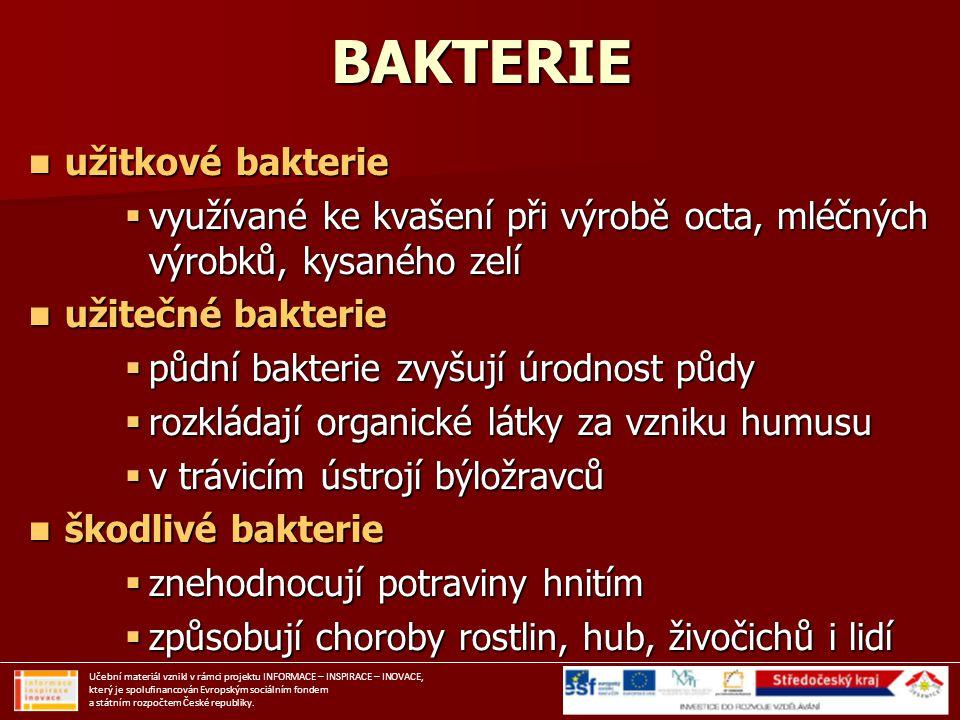 BAKTERIE užitkové bakterie