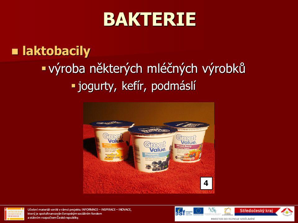 BAKTERIE laktobacily výroba některých mléčných výrobků