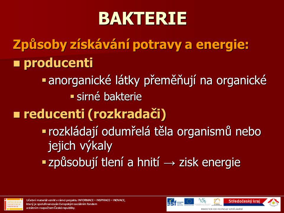 BAKTERIE Způsoby získávání potravy a energie: producenti