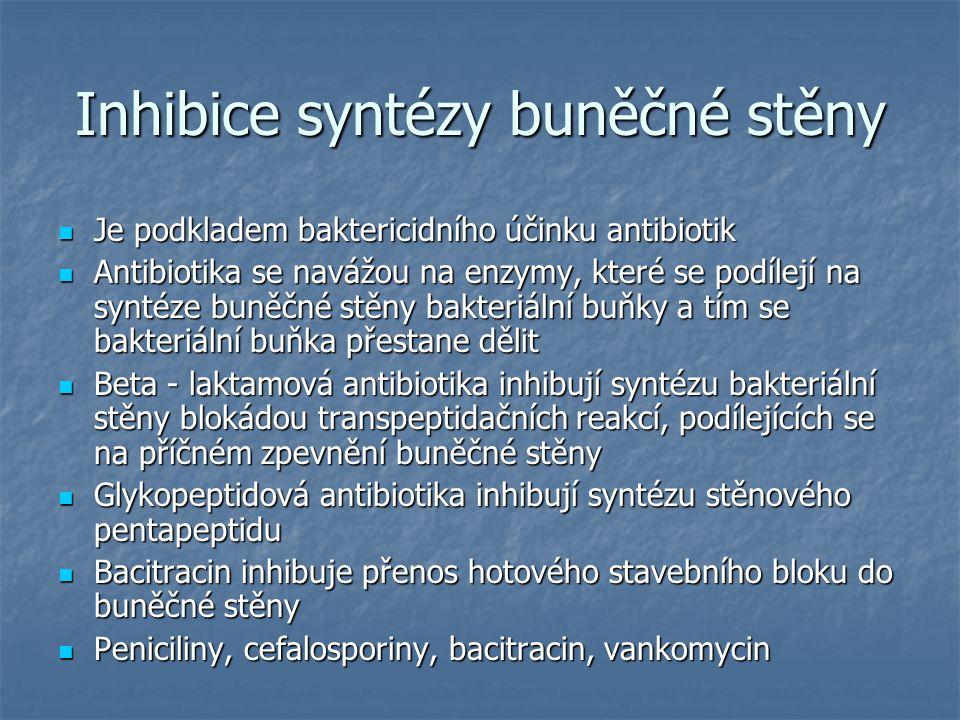 Inhibice syntézy buněčné stěny
