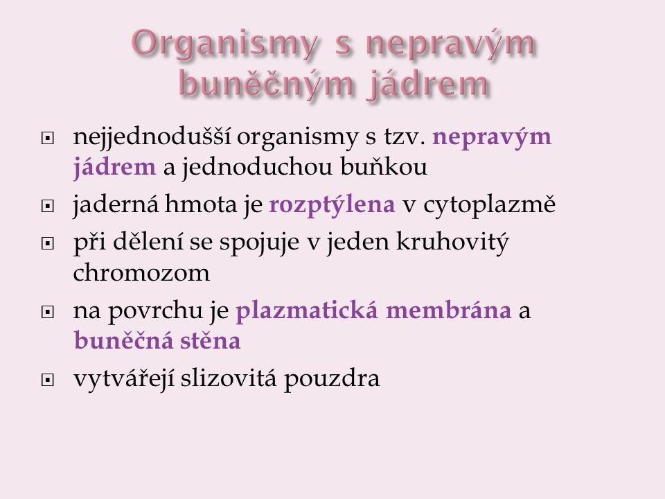 Organismy s nepravým buněčným jádrem