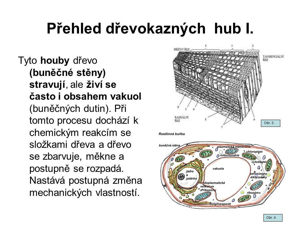 Přehled dřevokazných hub I.