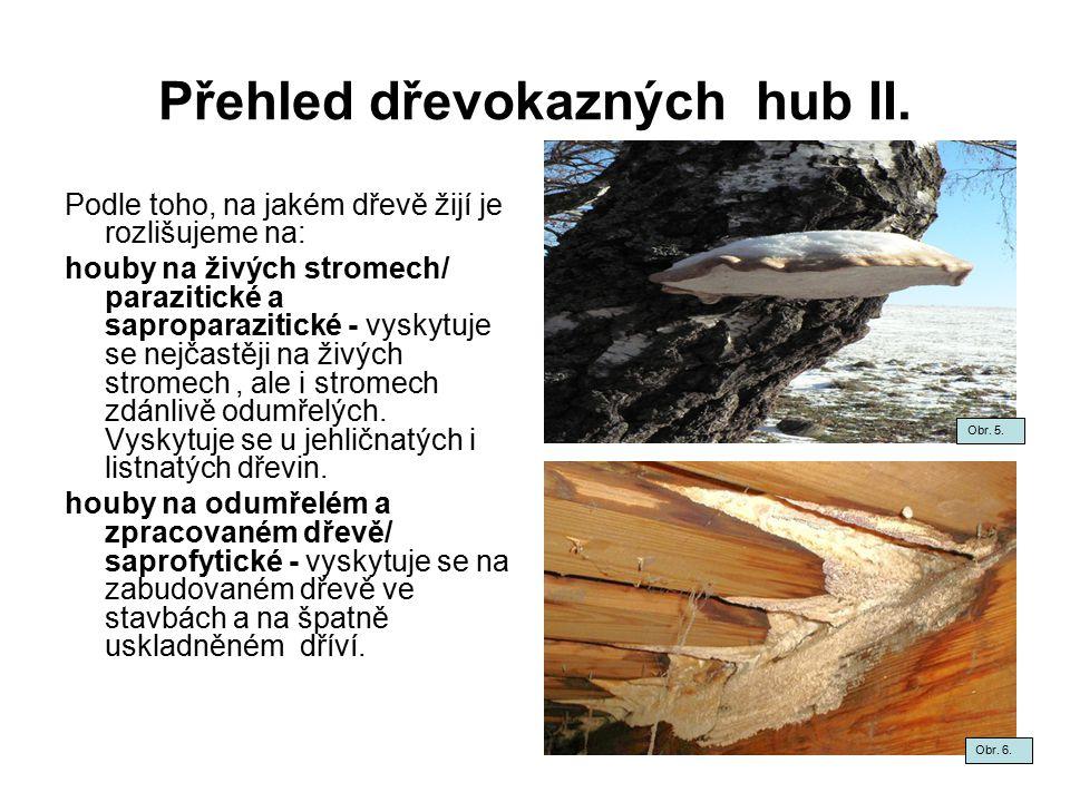Přehled dřevokazných hub II.