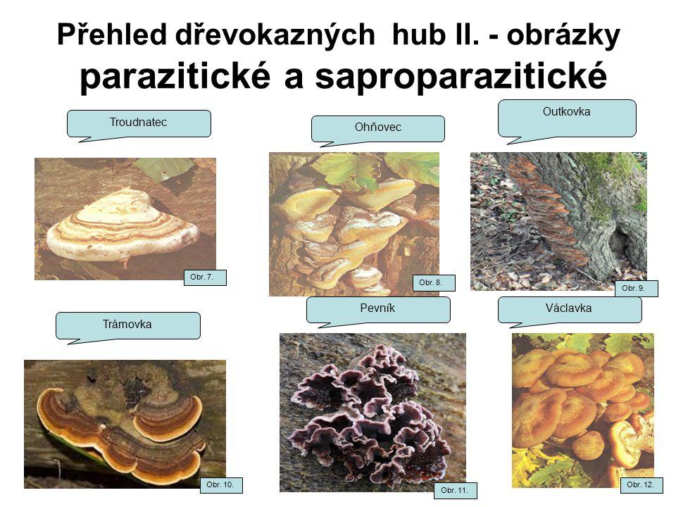 Přehled dřevokazných hub II. - obrázky parazitické a saproparazitické