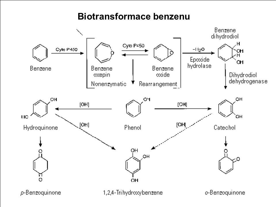 Benzen Biotransformace benzenu