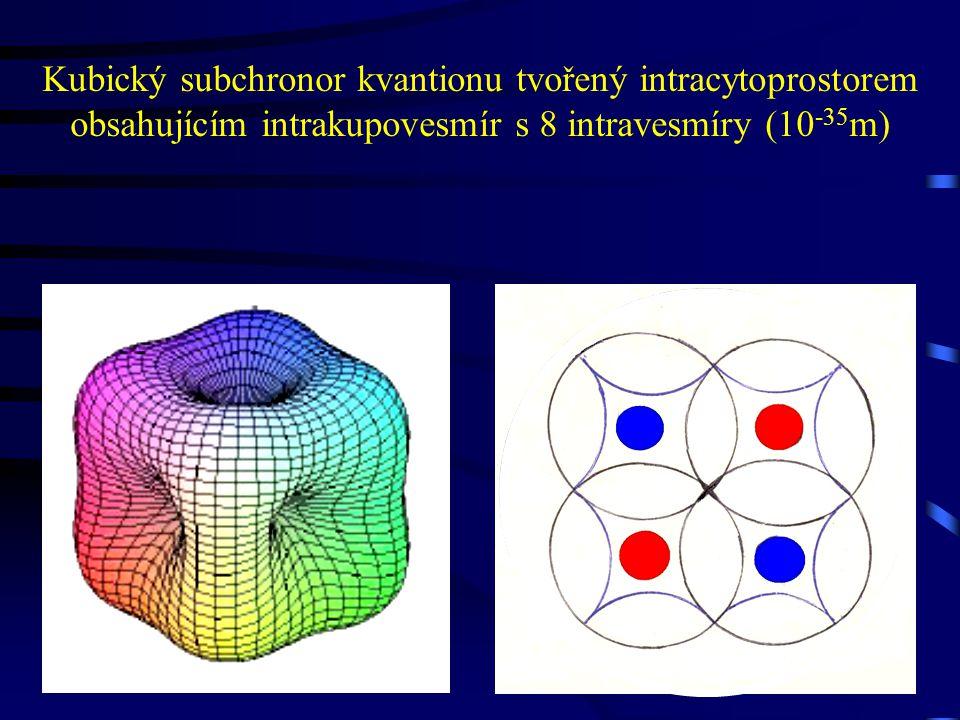 Kubický subchronor kvantionu tvořený intracytoprostorem obsahujícím intrakupovesmír s 8 intravesmíry (10-35m)