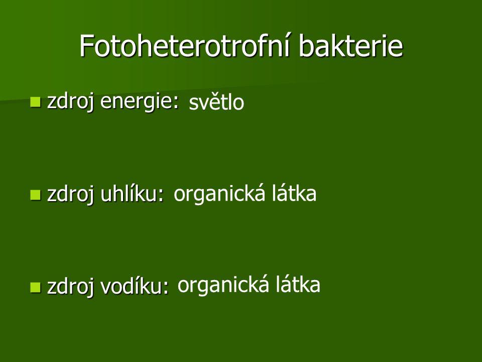 Fotoheterotrofní bakterie