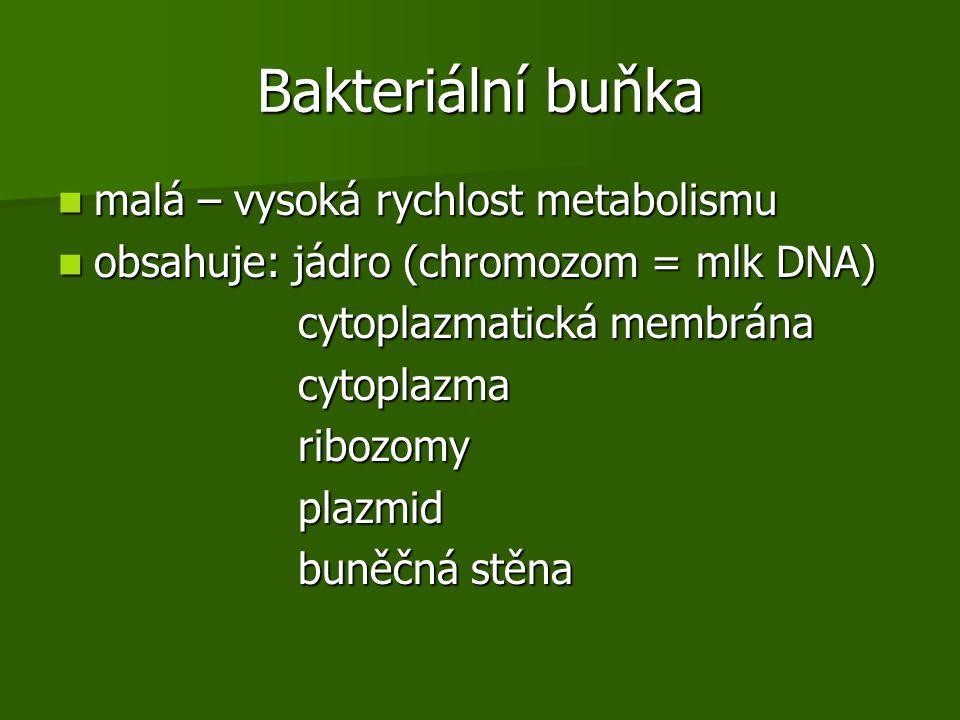 Bakteriální buňka malá – vysoká rychlost metabolismu