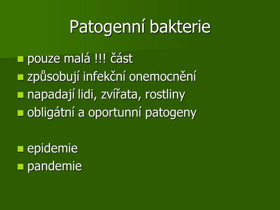 Patogenní bakterie pouze malá !!! část způsobují infekční onemocnění