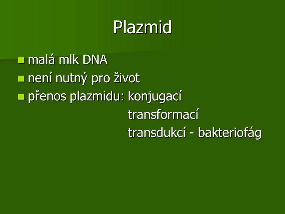 Plazmid malá mlk DNA není nutný pro život přenos plazmidu: konjugací