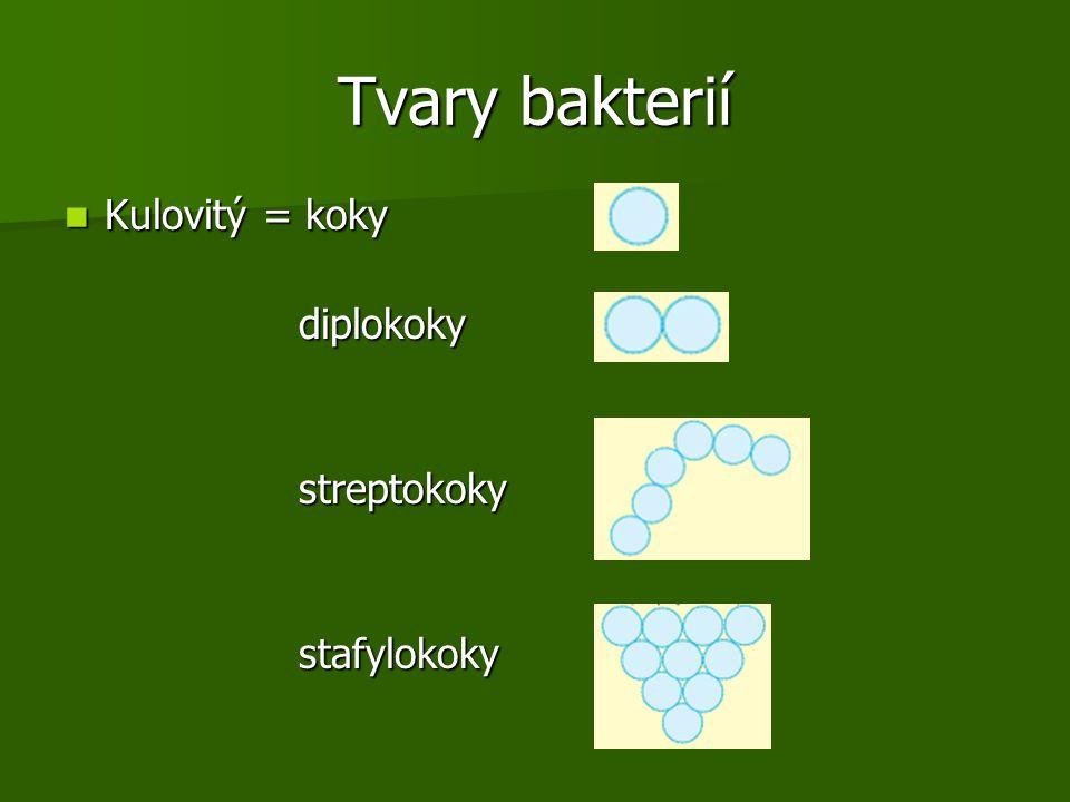 Tvary bakterií Kulovitý = koky diplokoky streptokoky stafylokoky