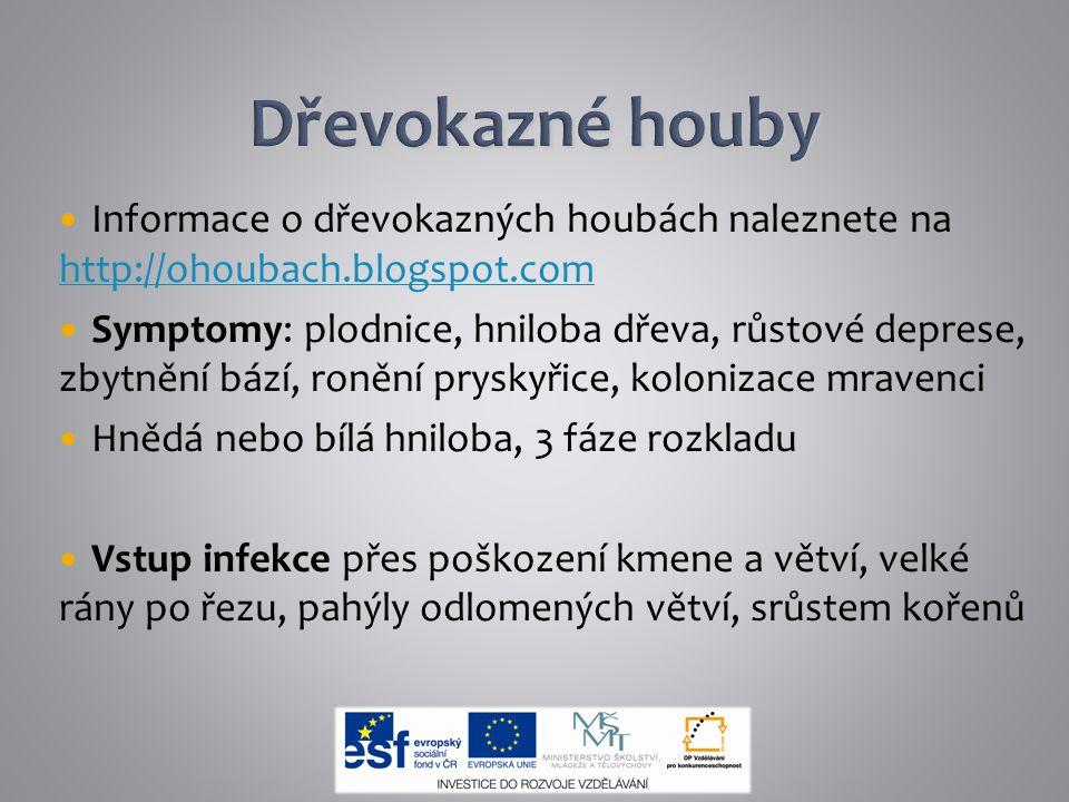Dřevokazné houby Informace o dřevokazných houbách naleznete na http://ohoubach.blogspot.com.