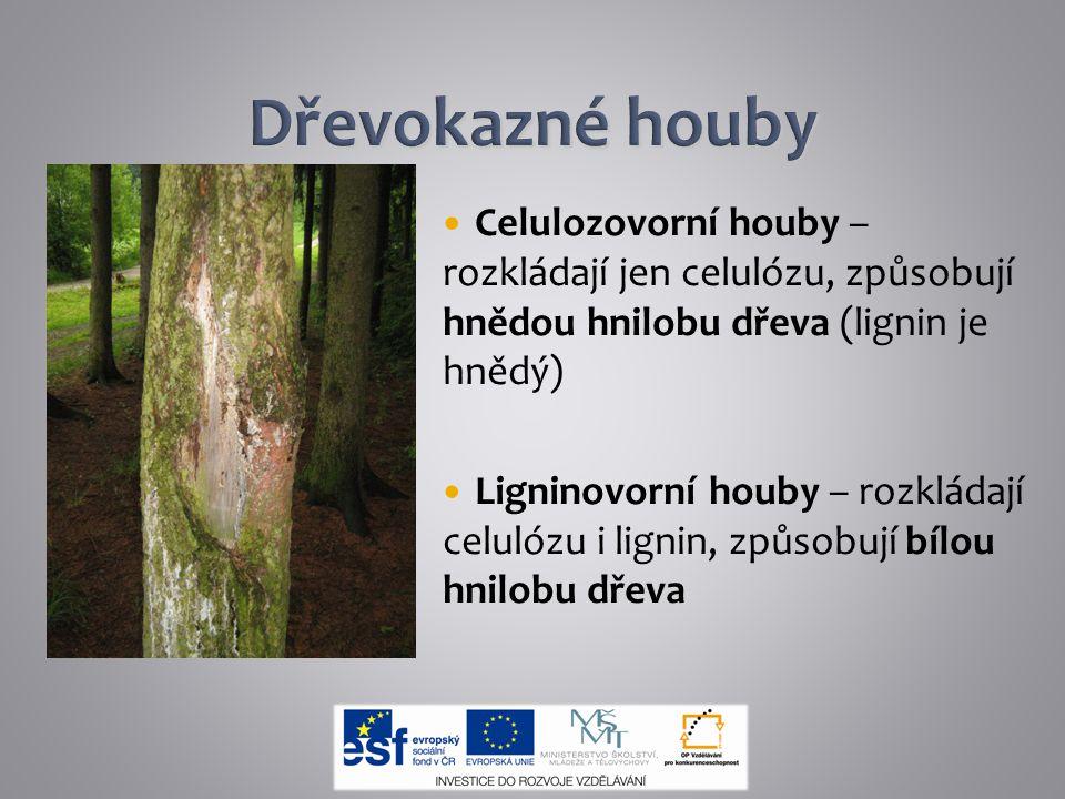 Dřevokazné houby Celulozovorní houby – rozkládají jen celulózu, způsobují hnědou hnilobu dřeva (lignin je hnědý)