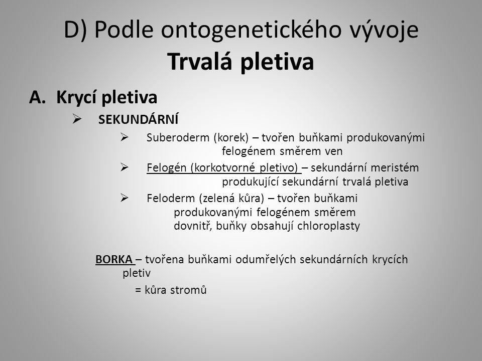 D) Podle ontogenetického vývoje Trvalá pletiva