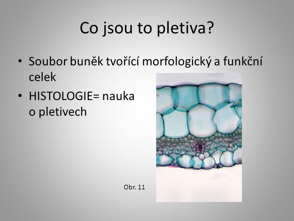 Co jsou to pletiva Soubor buněk tvořící morfologický a funkční celek