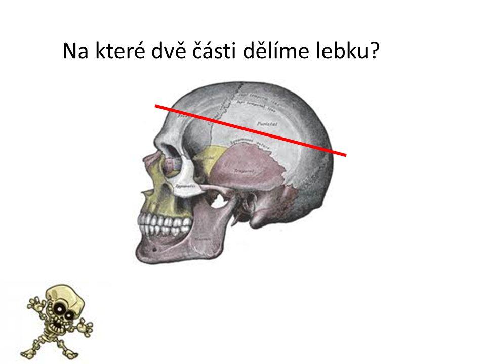 Na které dvě části dělíme lebku