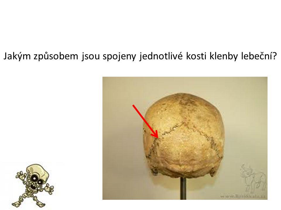 Jakým způsobem jsou spojeny jednotlivé kosti klenby lebeční